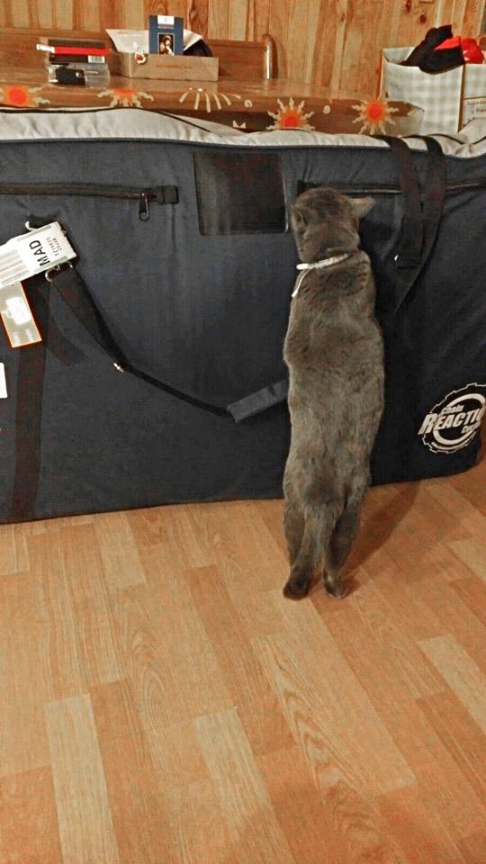 Sheila checks my bike bag out