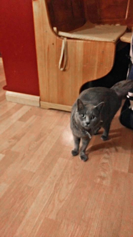 Sheila the cat